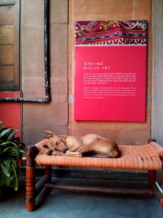 Gujarat_Bhuj_KhamirCraftResourceCenter_DoggieOnKhat