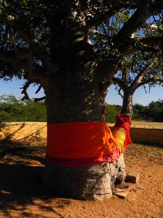 Gujarat_Kutch_Sacredtree