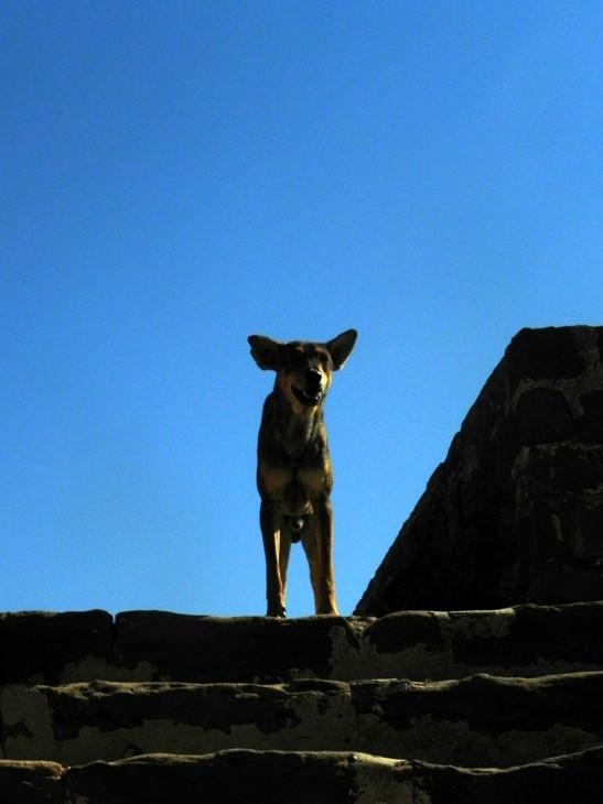 Gujarat_LakhpatFort_Doggie