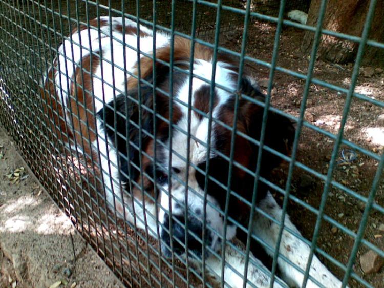Coca in cage