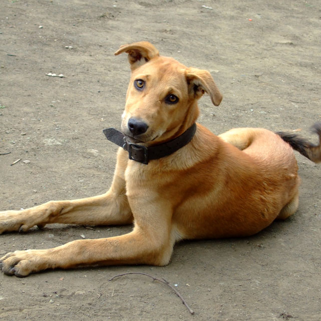 Doggie at Lonar