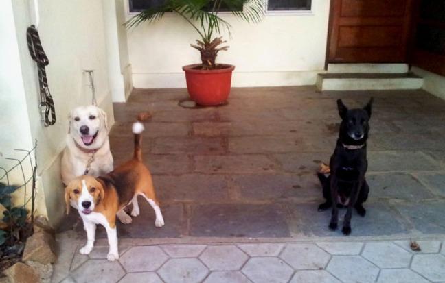 Dogs in Jubilee Hills