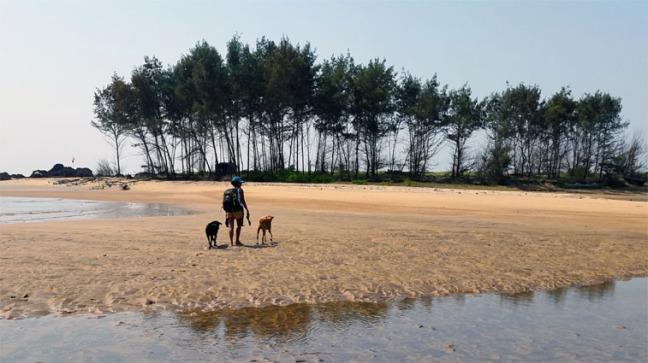 Dogs on beach in Goa