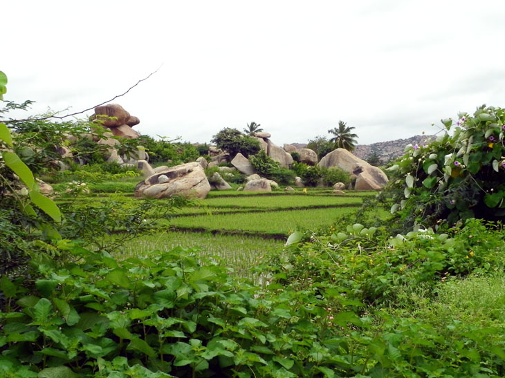 Hampi_OtherSide_Fields1