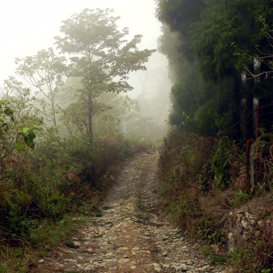 A mysterious misty road on Deolo Hill, Kalimpong, West Bengal, India