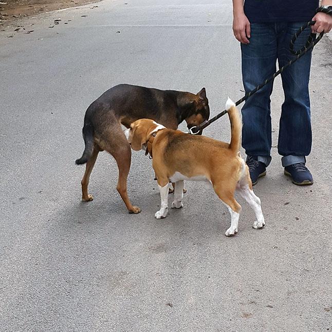 Dog body language - Submission