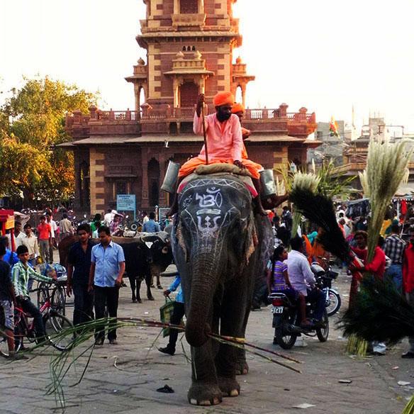 Jodhpur - Sardar market elephant