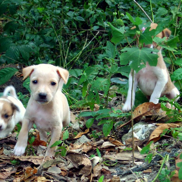 Andamans-Havelock-Beach pups
