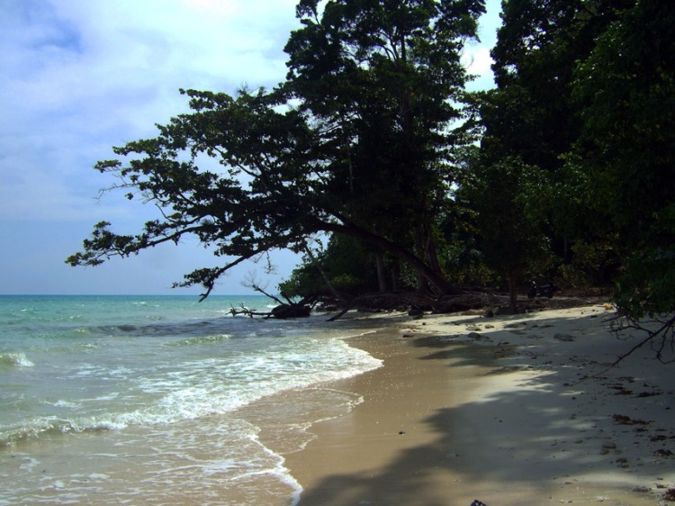 Andamans-Havelock-Kala pathar trees