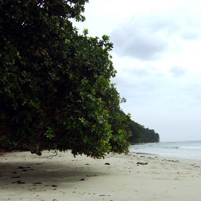 Andamans-Havelock-Radhanagar beach1