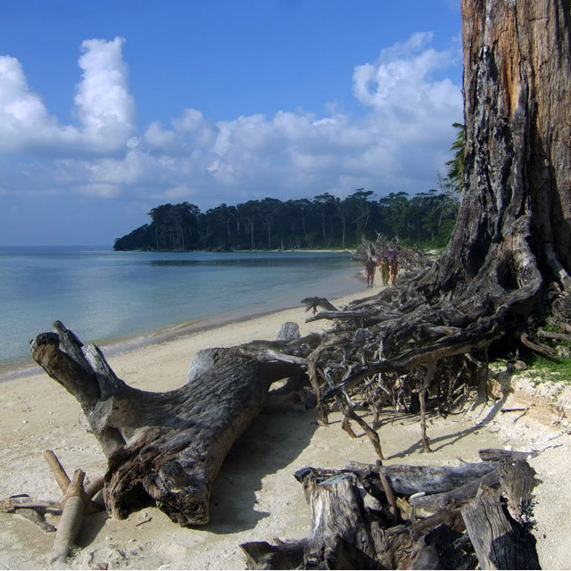 An old tree along the still waters of Wandoor beach