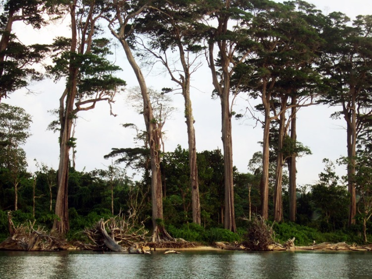 Andamans-Wandoor-Trees