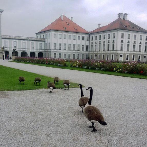 Munich - Nymphenburg geese 1