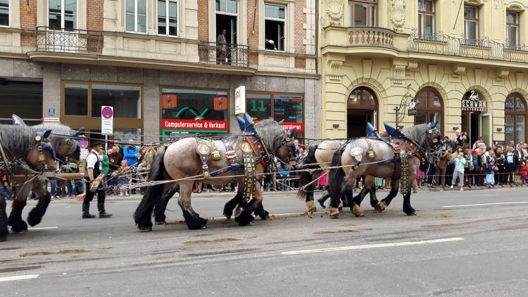 Munich - Parade horses