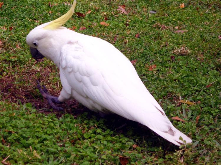 Sydney - Mrs McQuaries Road Cockatoo