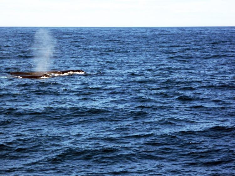 Sydney - Whales plume