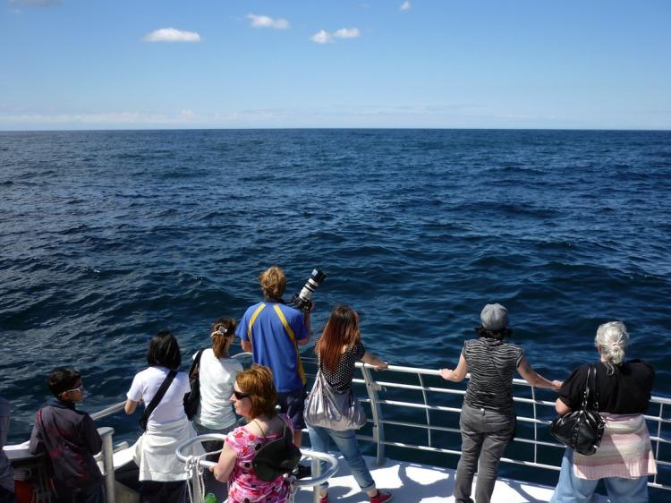 Sydney - Whales watchers