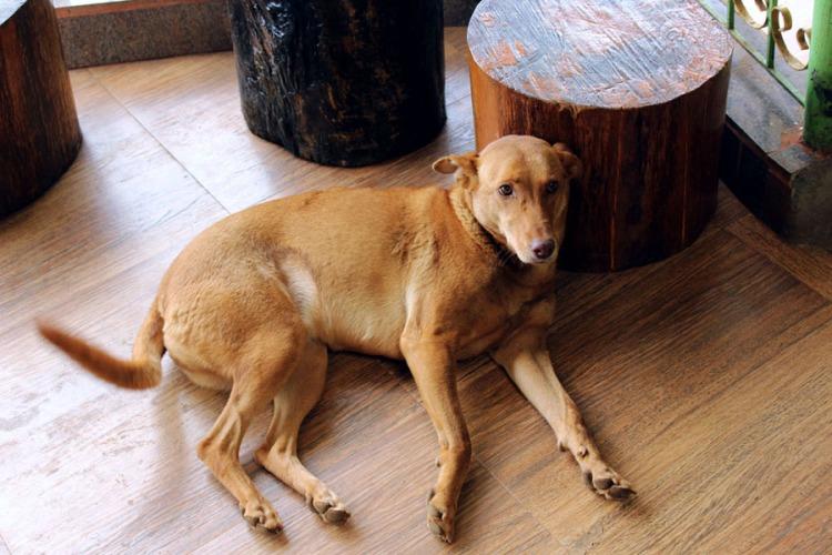 Coonoor - Tea plantation - Doggie