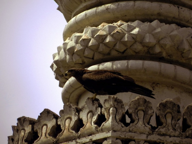 Paigah Tombs - Kite on minaret