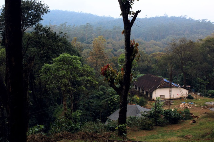 Coorg - Plantation workers house