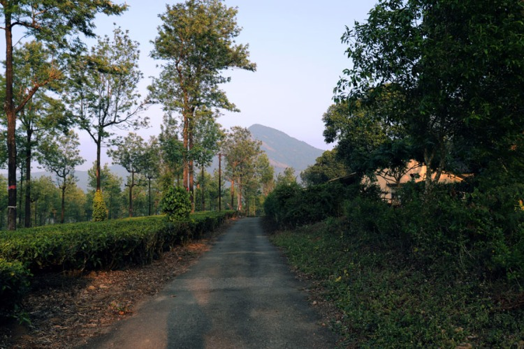 Valparai - Plantation road and mountain